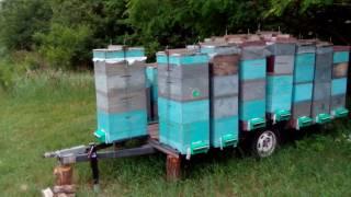 Пасечный прицеп платформа. Прицеп для перевозки пчел