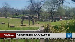 Toronto Zoo unveils 'drive thru' scenic safari experience
