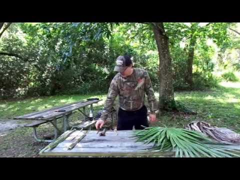 Saw Palmetto: Florida's Bushcraft Survival Plant!