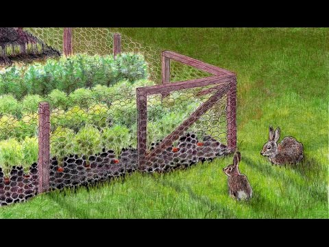 HOW TO KEEP YOUR GARDEN FROM RABBITS