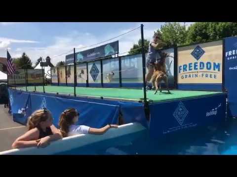 Doggy long jump at 2018 Dog Bowl