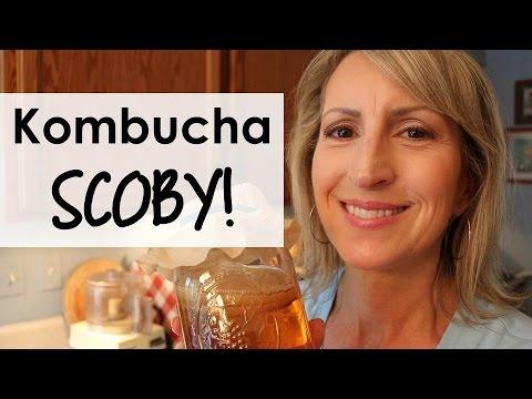 How to Make Your Own KOMBUCHA SCOBY for Kombucha Tea!