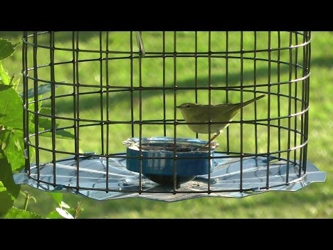 Bluebird feeder or oriole feeder? 2014
