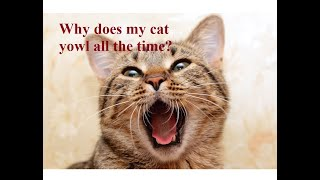 Ask Amy: Why Does My Cat Yowl Constantly?