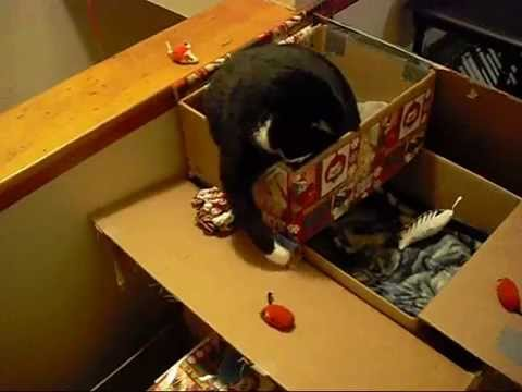 How To Make A Kitty Condo