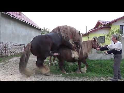 Xxx Mp4 Kuda Kawin Anunya Gede Banget Horse Mating Compilation 3gp Sex