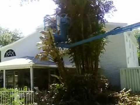 Tree Trimming Tampa, Fl