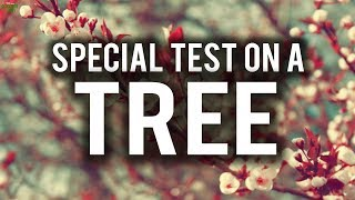 SPECIAL EXAMINATION ON A TREE FROM THE QURAN (Powerful)
