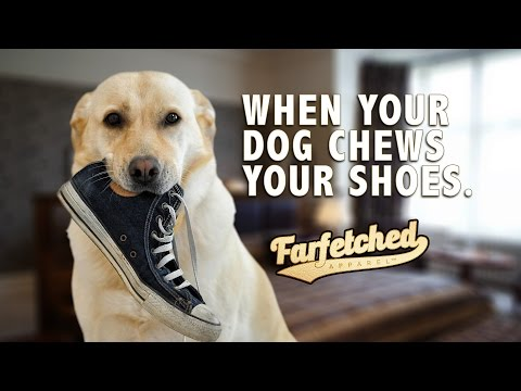 When Your Dog Chews Your Shoes - #FarfetchedTV