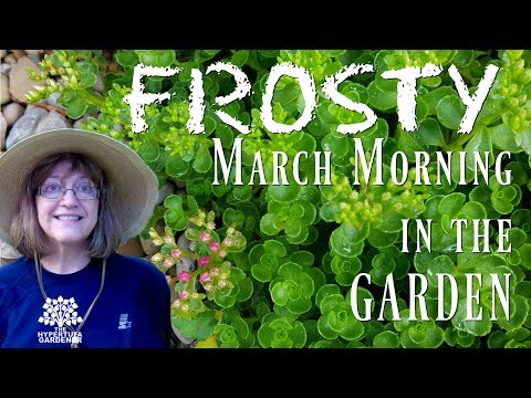 Frosty March Morning 💐 Spring Is Returning