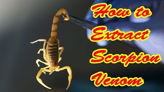 Download How to extract Scorpion venom || Scorpion venom is the most expensiv liquid on the earth || Video
