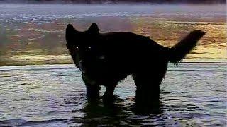 Sunrise Hike - Blue Bay Shepherd & GSD (#1)