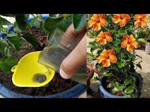 5 जादुई नुस्खे पौधों से ज्यादा फ़ूल पाने के लिए !