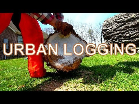 IF SAWMILLS INTEREST YOU THEN WATCH THIS VIDEO,ANOTHER WAY TO FIND LOGS FOR THE SAWMILL