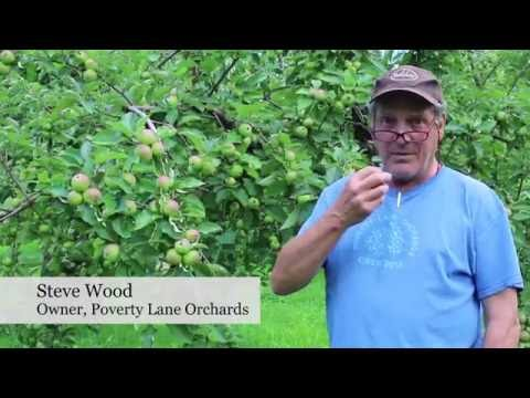 Bittersweet Flavor Key to Hard Cider Varieties—FGNtv