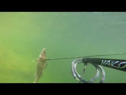 Spearfishing Lake Powell Walleye, Striper and Crappie