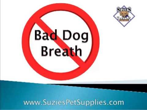 How to Cure Bad Dog Breath | Natural Remedies to Cure Bad Dog and Puppy Breath