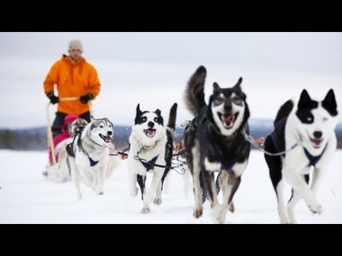 Pasi the Husky Farm Owner in Lapland - FINLAND