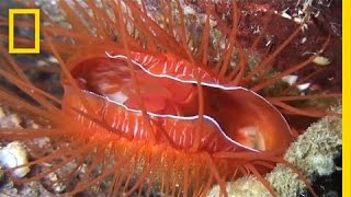 Electric Disco Clams Exist—Watch Them Light Up This Coral Reef