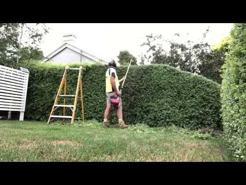 How to trim hedges