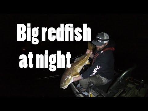 Big redfish at night
