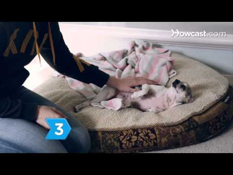 How to Recognize Symptoms of Serious Illness in Dogs