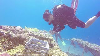 Unlocking the secrets of survival of Red Sea coral reefs