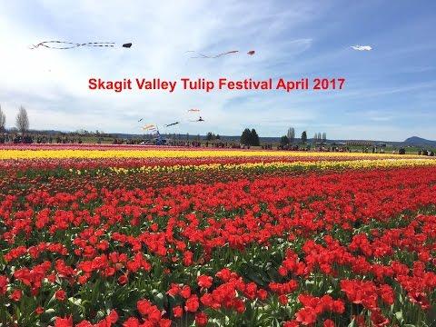Skagit Valley Tulip Festival, Mount Vernon, WA April 2017