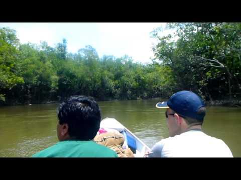 Amazon Jungle Challenge 2013