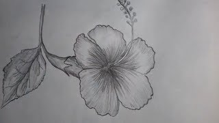 How To Draw Hibiscus Flower Easy Hibiscus Drawing For Kids