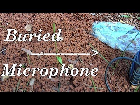 Underground Sounds - Ants at Work