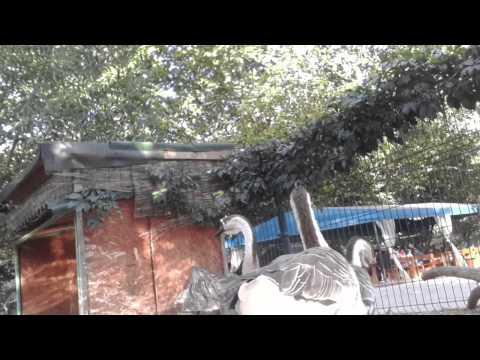 amsung Galaxy Gear - Camera Sample 720p HD 2014