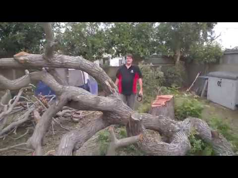 Cutting Down a Tree Safely and in the Direction You Want it to Fall!