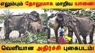 எலும்பும் தோலுமாக மாறிய யானை! வெளியான அதிர்ச்சி புகைபடம்! Tamil News | Latest News | Viral