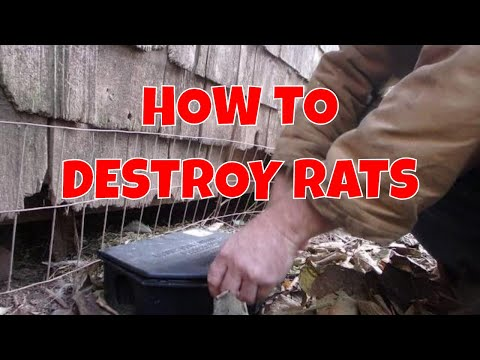 HOW TO take care of RAT / MOUSE problem in your Chicken Coop! Poison / Traps