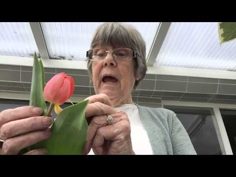 Wonky Tulips