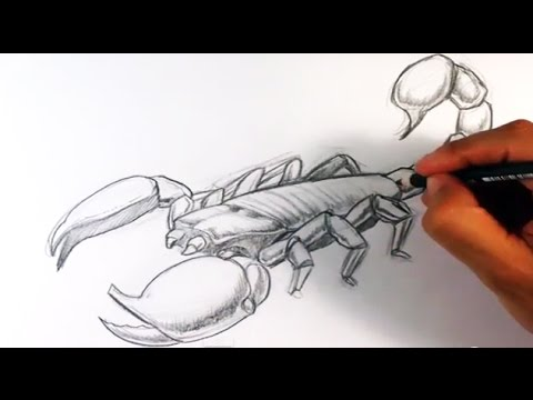 How to Draw a Scorpion - Easy Things To Draw