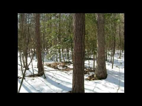 Buy Wooded Land in Hanover County, 42 Acres at a Deeply Discounted Price!!