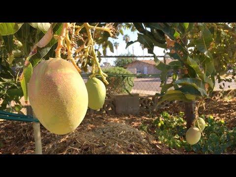 Ep175b - Periscope Farm Bonus Episode - Music Video - May 2018