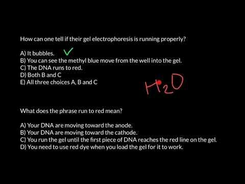How gel electrophoreses works