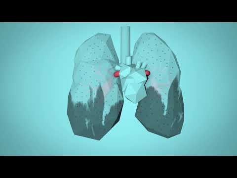 WHO: BreatheLife - How air pollution impacts your body