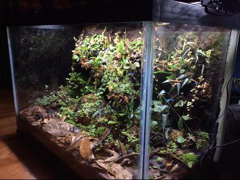 Vivarium Planting Part 2!