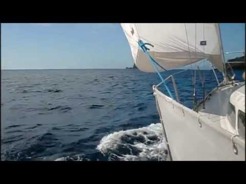 Sailing with dolphins in the Azores