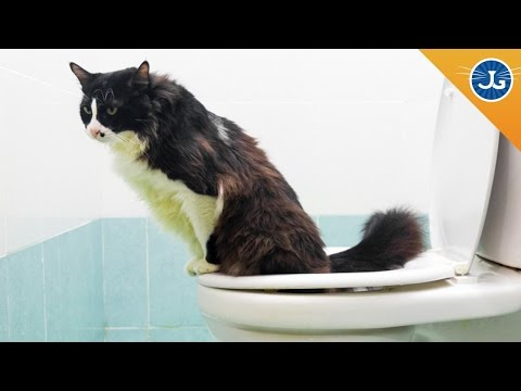 Why You Should NOT Toilet Train Your Cat
