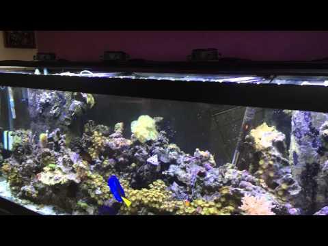 My reef tank / Beamswork LED Reef Light
