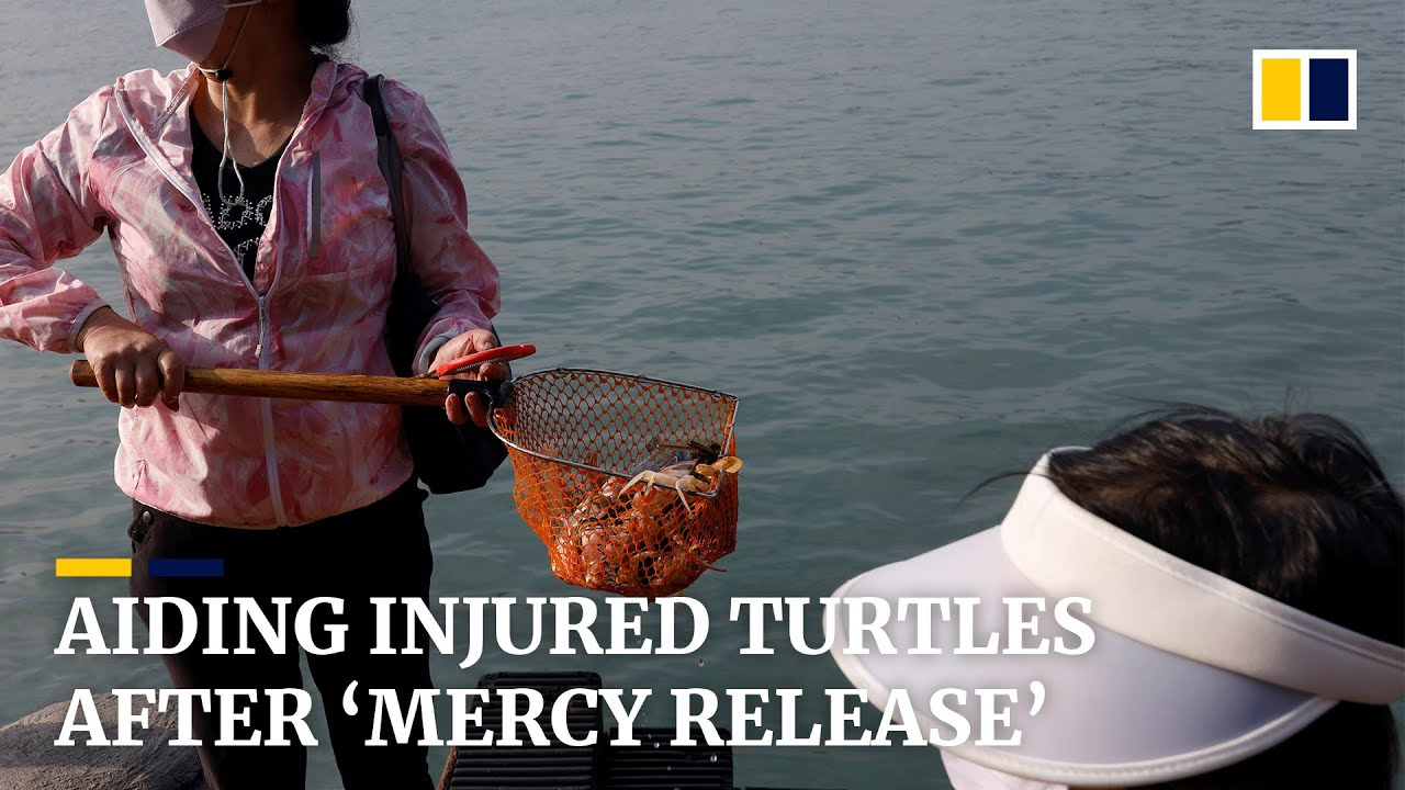 'Mercy release' could be dangerous to freed animals and local environment