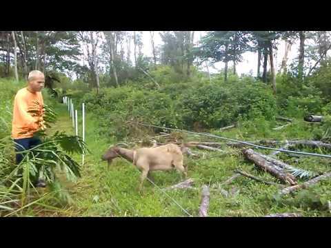 How to Train Animals to Respect an Electric Fence
