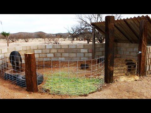 Building a Pig Pen - Organic Shape - Rehoming a Heritage Hog - Large Black & Her Piglets