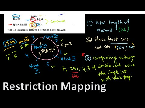 Restriction mapping tutorial 1 | restriction mapping problems for CSIR NET exam