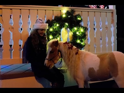 Christmas with Nemo the Mini Horse